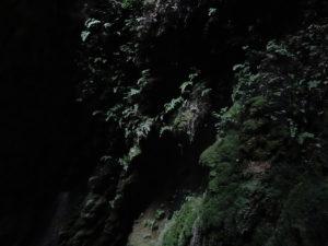 Musgos y vegetación sobre la pared de la poza intermedia