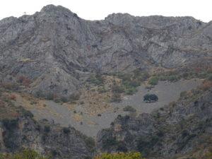 Encina solitaria en pedregal, bajo las paredes de Piedra Blanca