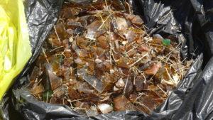 Envases de vidrio rotos en trozos de divesos tamaños. Éste es el residuo más abundante en la zona, el que más pesa y el más complicado de liberar