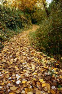 camino otoñal contrastes verdes perennes chorreras valdepeñas de jaen