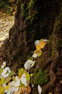 accion del viento en tronco otoño chorreras valdepeñas de jaen