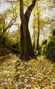 dorado otoñal contraste verdes perennes y marrones suelo en las chorreras valdepeñas de jaen