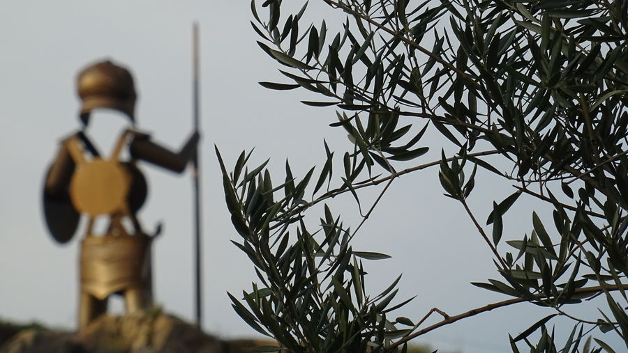 Olive grove tours
